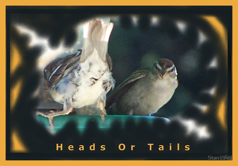 Heads or Tails by Starr1949