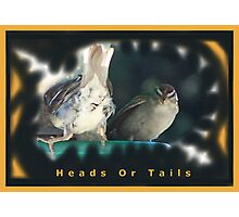 Heads or Tails Photographic Print