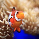 Clown Fish by Daniela Pintimalli