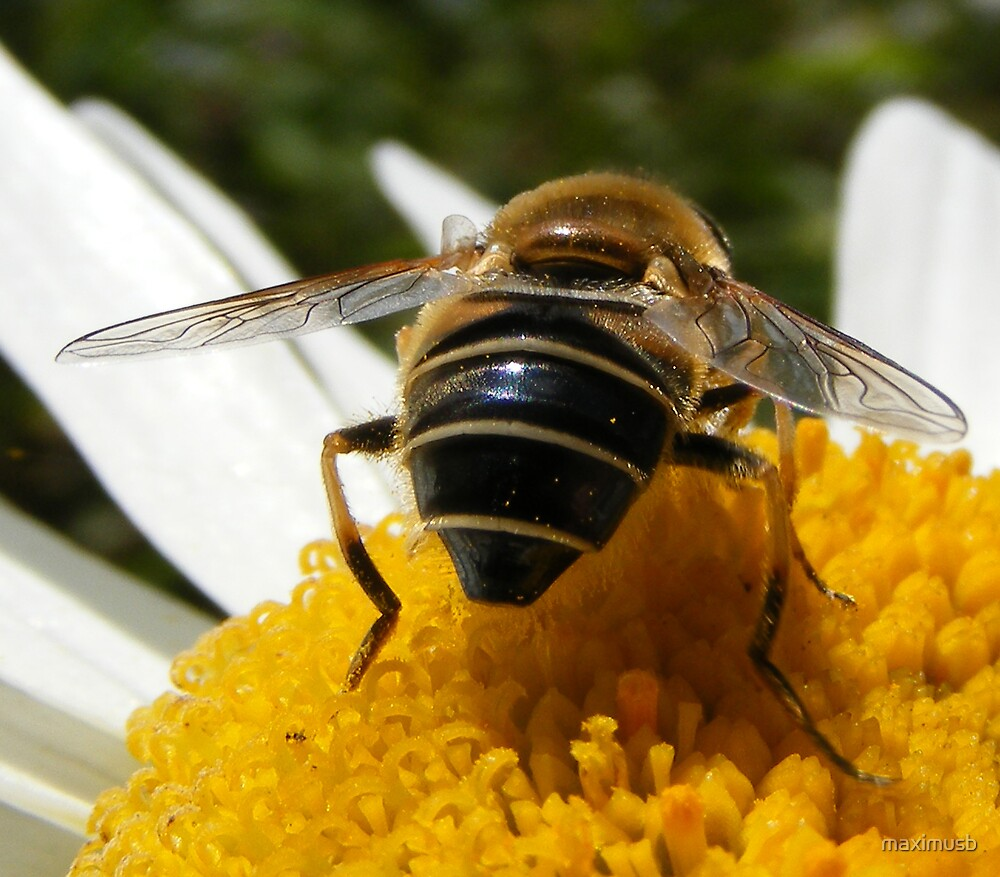 hover fly two by maximusb