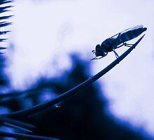 Prayer in Blue by MaryO