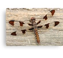 Common Whitetail Dragonfly Female Canvas Print