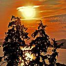 """""""Sun Set Stanley Park"""" by Steven Schwartz"""