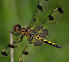 ▂ ▃ ▅ ▆ █ I'M A HANDS ON KINDA DRAGONFLY █ ▆ ▅ ▃ by ✿✿ Bonita ✿✿ ђєℓℓσ