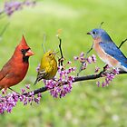 Is It Spring Yet? by Bonnie T.  Barry