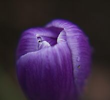 Purple Bud by Nicholas Gray