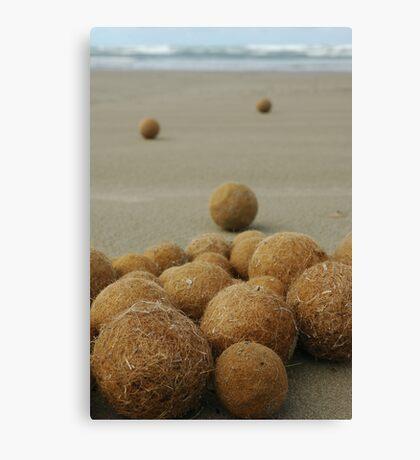 Seagrass balls at Middleton Canvas Print