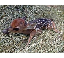 Welcome To The World Little Fawn Photographic Print