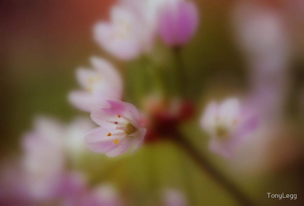 plantscapes by TonyLegg