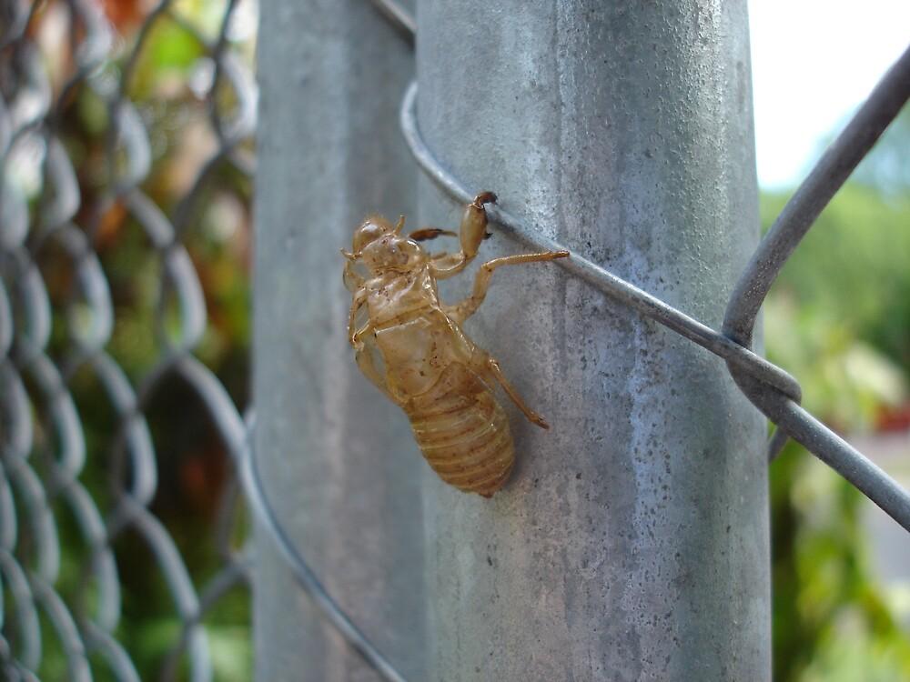 Cicada Ghost by Kym Smitt