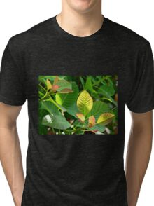 Backlit Leaves - Hyde Hall Tri-blend T-Shirt