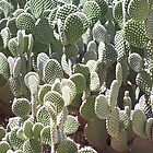 Bunny Ears, Polka Dot Prickly Pear Cactus 2035 by tkepner