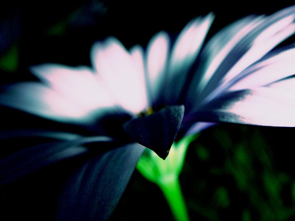 Powdered Blue by diongillard