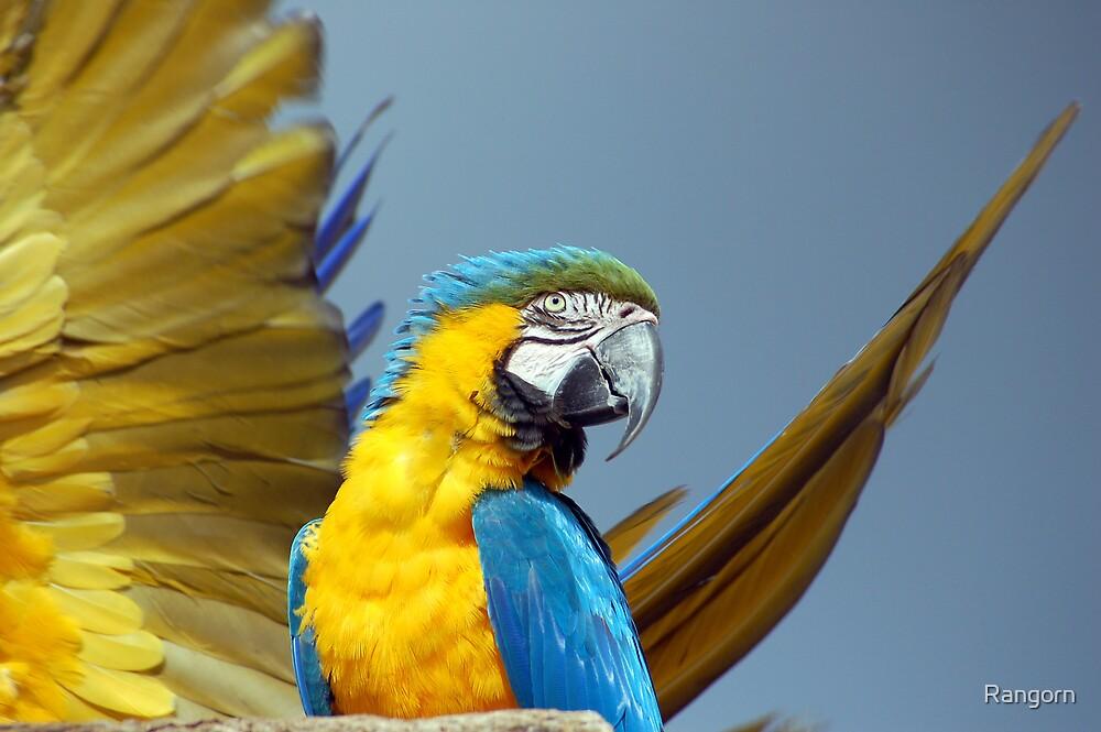 Blue Parrot  by Rangorn