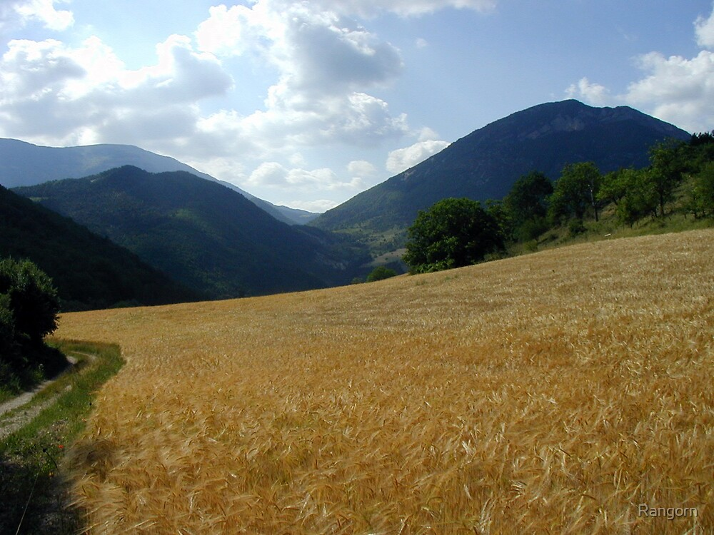 Wheat  by Rangorn