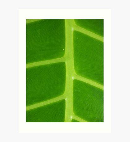 Green Veins Art Print
