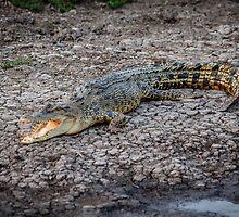 Crocodile Kakadu by Russell Charters