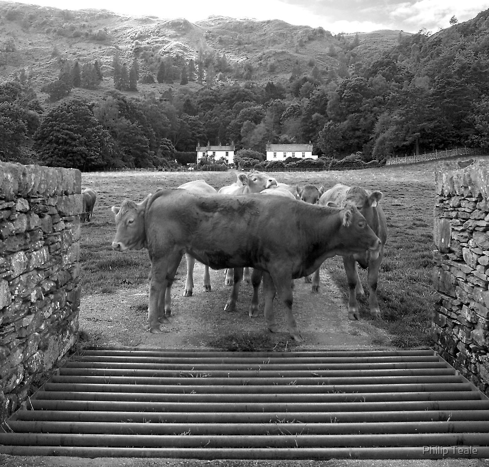 Cattle at Grasmere by Philip Teale