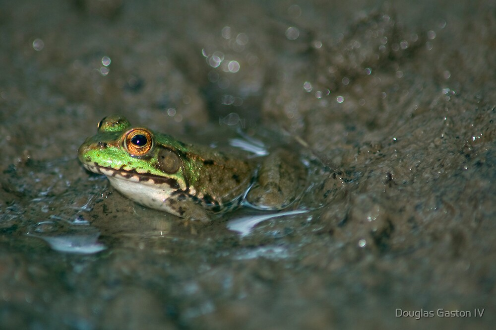 Frog by Douglas Gaston IV