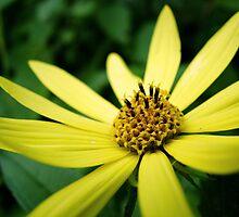 Yellow Flower by sara montour