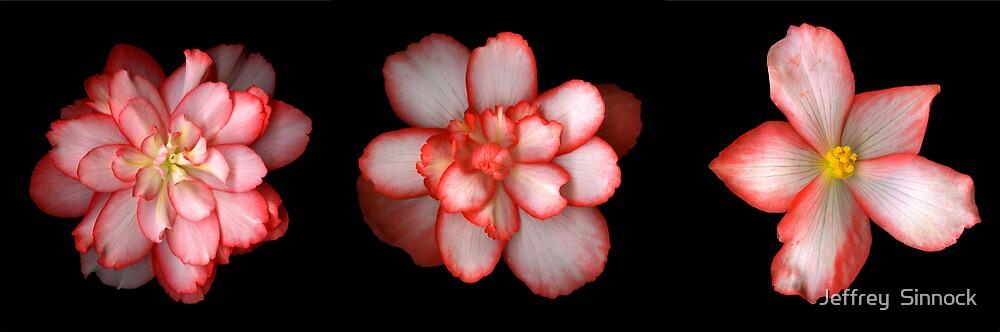 Three Begonia's by Jeffrey  Sinnock