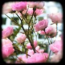 Bright and Pretty - Pink Flowers - Fine Art Viewfinder Photograph  by HighlandGhillie