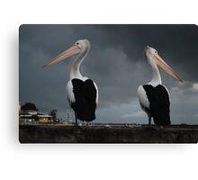 Unfriendly Pelicans Canvas Print