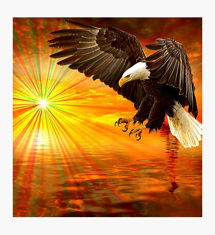 Eagle Over Water Photographic Print