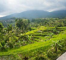 Bali Rice Terrace by redashton