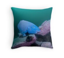 Blue Groper, green water Throw Pillow