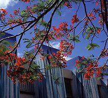 Port Vila by sonjas