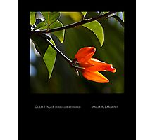 Vibrant Orange - Cool Stuff Photographic Print