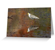 Masked Lapwing ~ Coloured By Nature Greeting Card