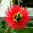 BOTTLE BRUSH BOTTOM by EricKyle