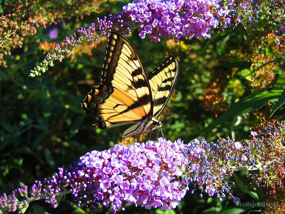 butterfly's snack by colbymichaels