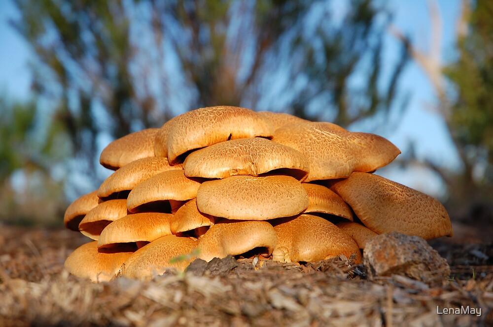 golden fungi by LenaMay