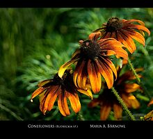 Coneflowers - Cool Stuff by Maria A. Barnowl