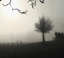 Schindellegi Fog by Tanya B. Schroeder