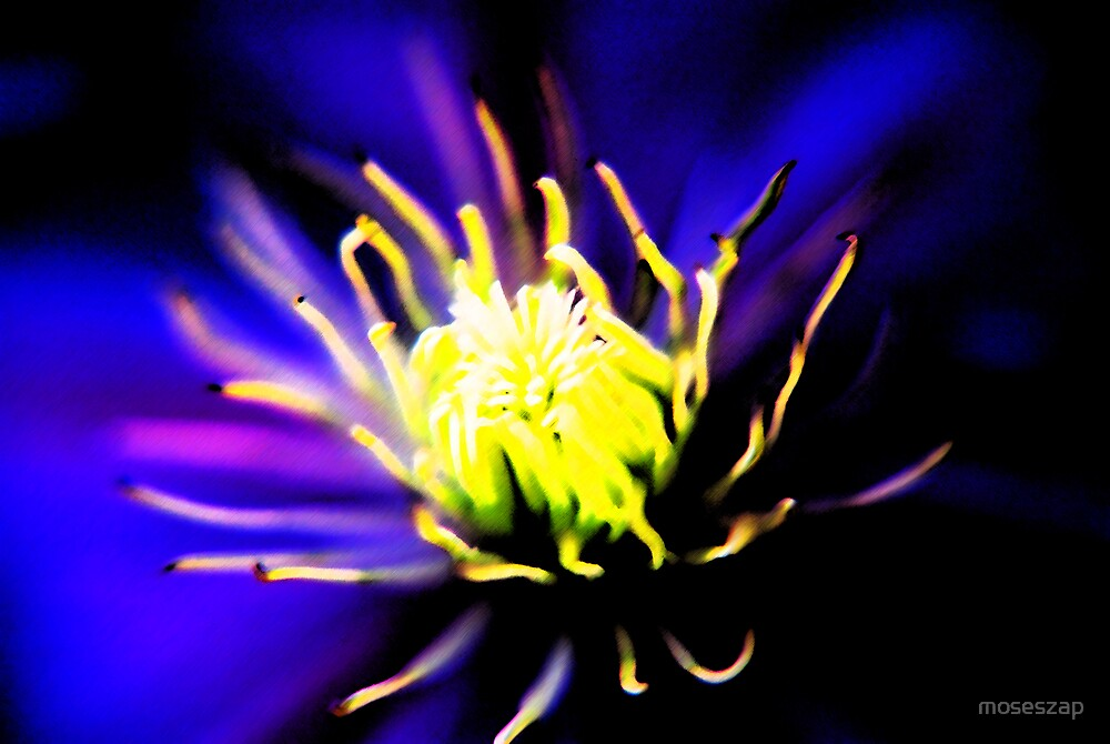 dark side of a flower by moseszap