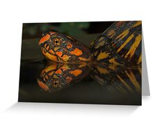 Box Turtle Reflection Greeting Card