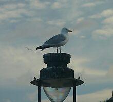 Watch Light by Wrigglefish