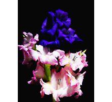 Gladiola Dreamin' Photographic Print