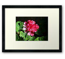 pretty flower Framed Print