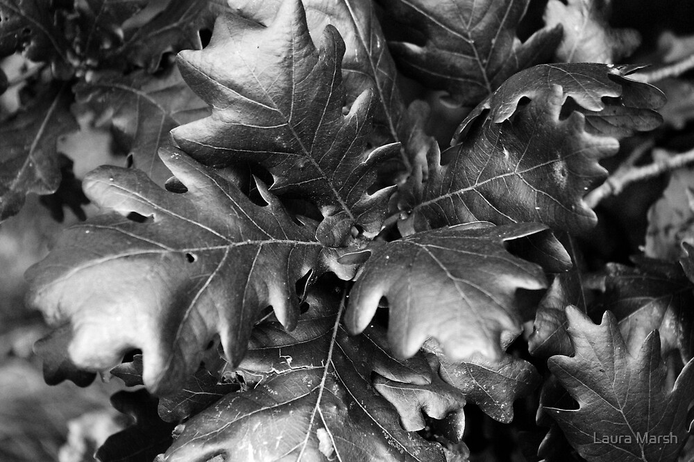 Leaves by Laura Marsh