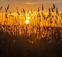 Natural World - Sunset's and Sunrise by Alec Owen-Evans