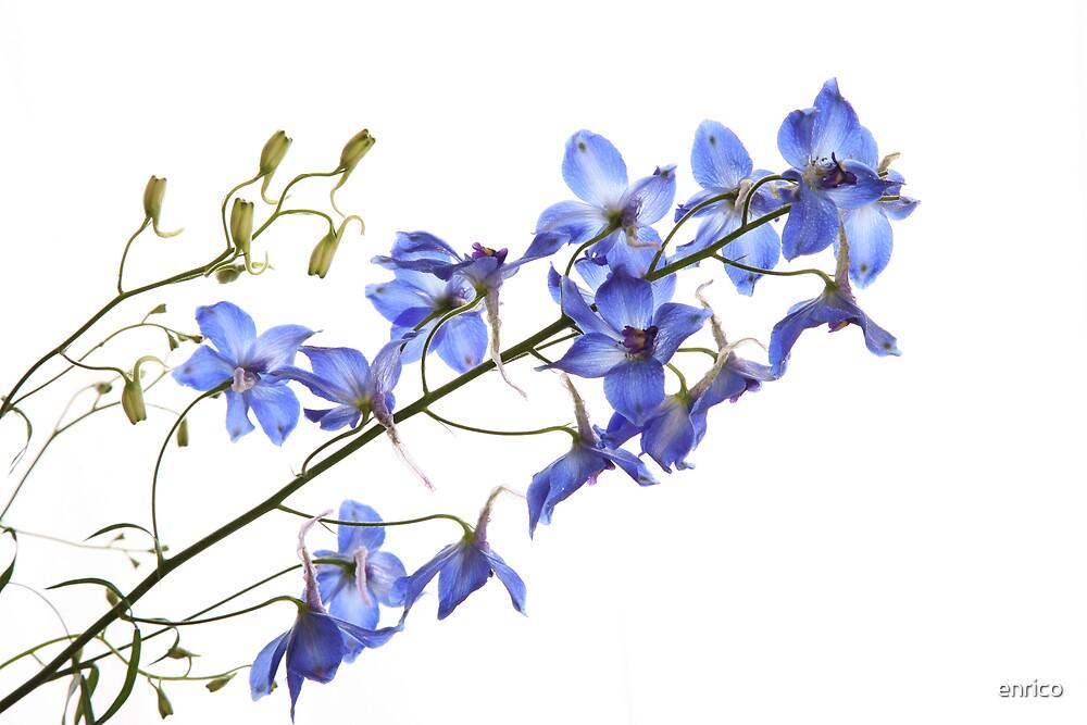 purple flower by enrico