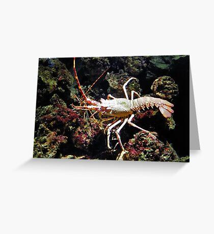 The seek of the sea crayfish Greeting Card