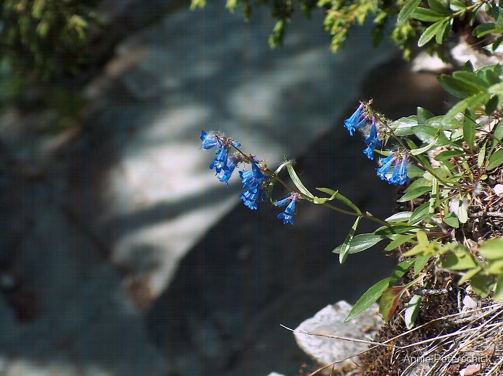 Blue Bell 2 by Annie Peterschick