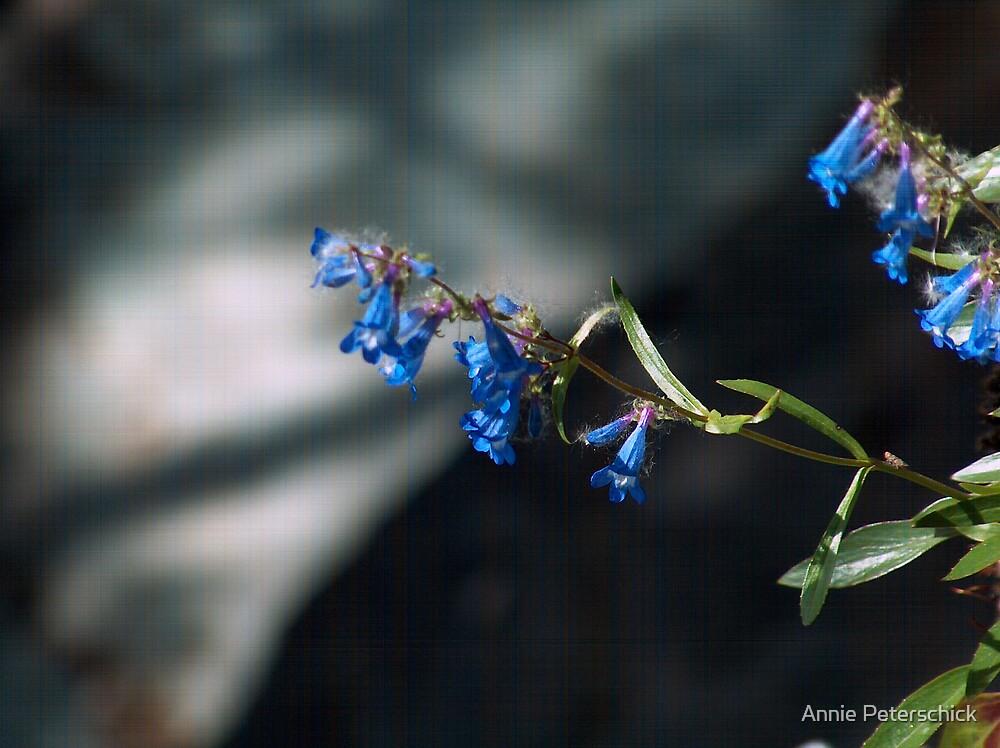 Blue Bell by Annie Peterschick