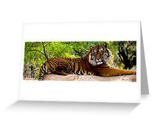 Lounging Tiger (Panthera tigris) Greeting Card